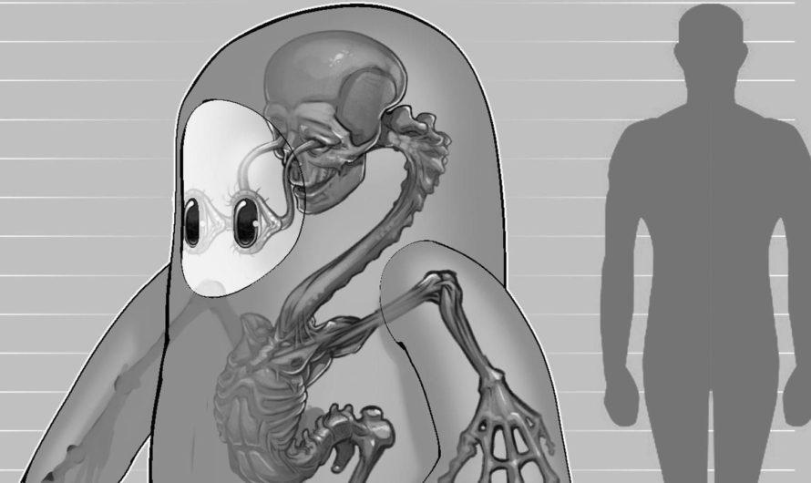 Fall Guys revela la horrenda anatomía interna de sus personajes con forma de frijol